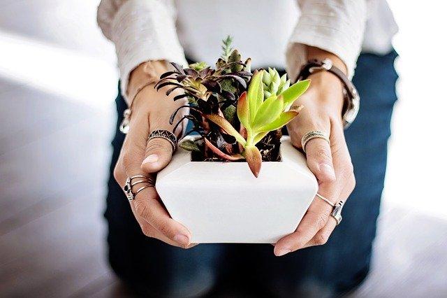 Focus sur les plantes décoratives intérieures
